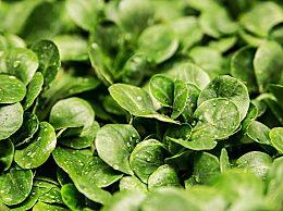 春天适合种的蔬菜有哪些?立春过后适合种什么菜
