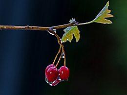 关于雨水的诗句有哪些?关于雨水的古诗诗句