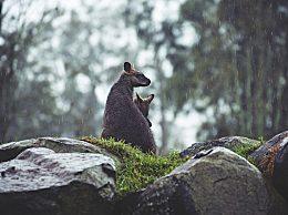 描写雨水节气的诗句有哪些?诗人词人眼中的雨水景象美不胜收
