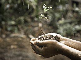 雨水节气有哪些习俗?雨水节气传统习俗汇总