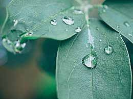 雨水节气怎么养生?雨水节气养生攻略 衣食住行都需注意
