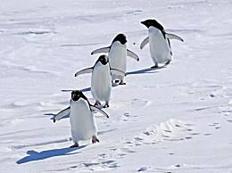 南极气温首破20度 全球变暖愈演愈烈气候危机加剧