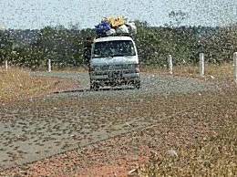 沙漠蝗虫席卷20多个国家 联合国发蝗灾警告