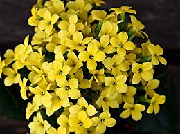 三月你好的正能量句子 愿一路繁花,春暖花开