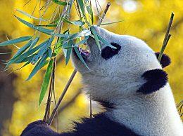 重庆动物园直播时间什么时候?重庆动物园直播在哪看