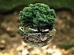 其他国家的植树节是哪一天?世界各国的植树节时间及节日名称