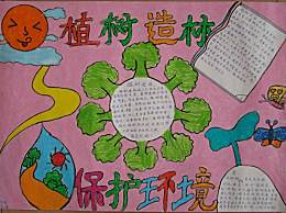 小学生植树节保护环境主题手抄报 植树节宣传植树造林口号句子
