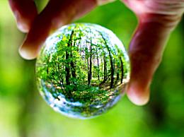 植树节植树可以减轻雾霾吗?植树的好处有哪些及起源介绍