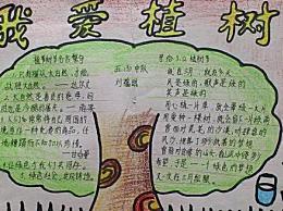 312植树节手抄报图片简单又漂亮 小学生植树节手抄报图片简笔画
