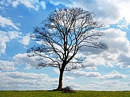 植树节是怎么来的?植树节的由来及意义
