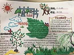 植树节主题手抄报简笔画 关于312植树节手抄报标语口号
