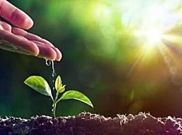 2020植树节是几月几号?植树节的意义和宣传标语口号