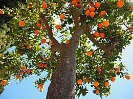 为什么要设立植树节?植树造林有什么作用和好处