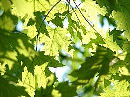 适合植树节发的朋友圈说说文案祝福语 植树节呼吁保护环境的句子
