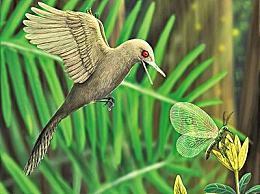 科学家发现迄今最小恐龙 琥珀中发现蜂鸟般大小恐龙新物种