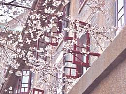 武汉大学云赏樱 樱花开放期间校园严格封闭