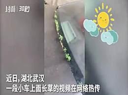 武汉市民发现车长草 车都发芽了看到希望了