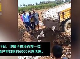谣言称新冠病毒和家禽有关 印度农民怕感染病毒活埋6000只鸡
