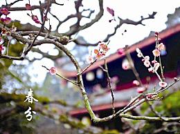 今年春分是几月几日几分几秒?春分节气知识简介