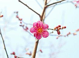 春分节气温馨早安祝福语 二十四节气春分朋友圈文案说说