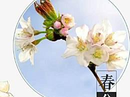 春分节气温馨早安祝福语 春分节气问候短信朋友圈祝福语