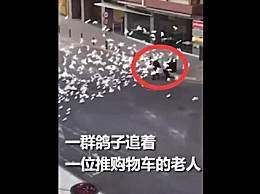 西班牙阿利坎特街头一幕火了,鸽子饿急了竟围攻路人