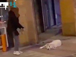 西班牙市民为出门租狗遛 把狗都累瘫了