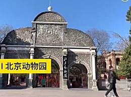 北京动物园复园 北京动物园开放时间是几点怎么预约