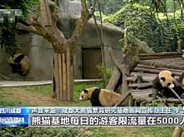 成都熊猫基地恢复开放 将对游客实行限流