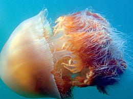 海洋生物资源最丰富的是哪个大洋