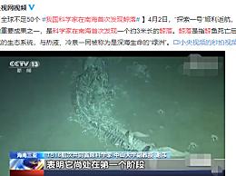 我国科学家在南海首次发现鲸落
