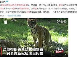 美国动物园回应老虎检测呈阳性