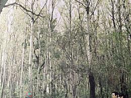 吴彦祖结婚10周年纪念日