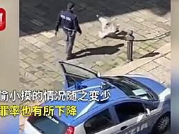 意大利两只海鸥打架被警察踹开