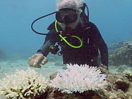 海水温度升高 大堡礁正在经历新一次大规模白化