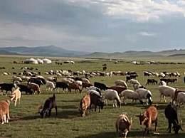 蒙古国赠送的羊什么时候来