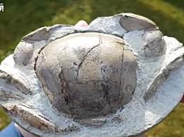 奇闻!男子海滩捡回一块石头 剥开惊现距今1200万年螃蟹化石
