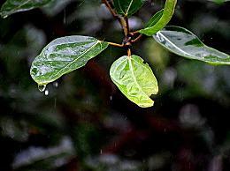 谷雨的祝福语短信说说