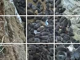 广东东源3000多竹鼠被处理