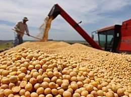 俄罗斯或暂停多种粮食出口6周