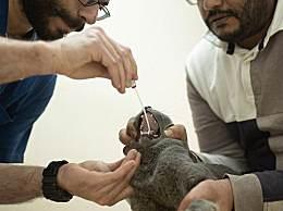美国首次发现宠物感染新冠