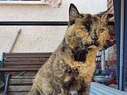 世界上最老的猫 相当于人类 141 岁