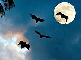 科学家担忧蝙蝠处境 蝙蝠远非我们的敌人