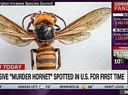 美国遭杀人蜂入侵
