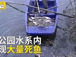 郑州高温致公园大量鱼死亡