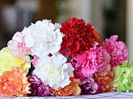 康乃馨的花语是什么?母亲节收到的康乃馨怎么养不会死
