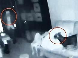入室盗窃宠物狗全程安静围观 任凭小偷三进三出