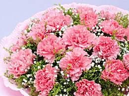 母亲节送多少朵康乃馨比较合适?不同颜色康乃馨有何寓意