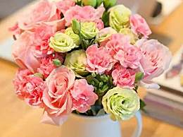 康乃馨的花语是什么