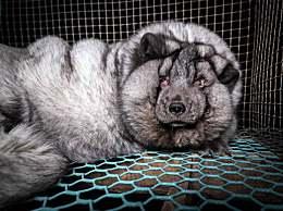 狐貍被養成怪物 沒有買賣就沒有殺害